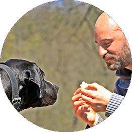 Attestation chiens de catégorie Grenoble