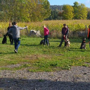Formation Educateur Canin, Formation Educateur Canin Grenoble, Formation Educateur Canin Isere, Formation Educateur Canin Tullins, Centre Education Canine Grenoble, Formateur Education Chien Grenoble, Centre Education Canine